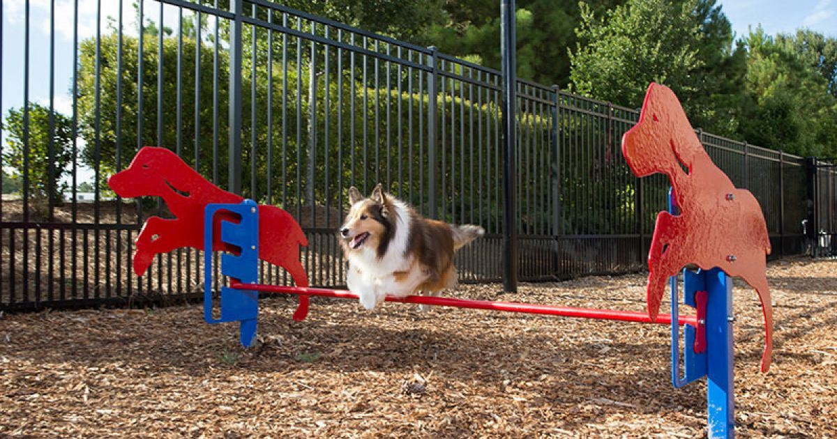 Dog-Park-Header-Index